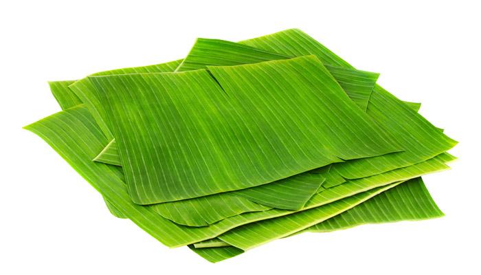 hojas de platano cortadas