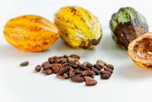 Los beneficios del consumo de cacao