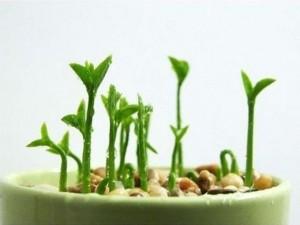 Cómo plantar un Limonero y brotar su semilla en tu huerto urbano