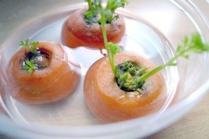 Germinar Zanahoria sin semilla