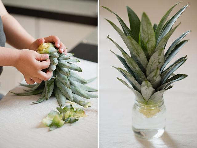 Cómo plantar una Piña sin semillas