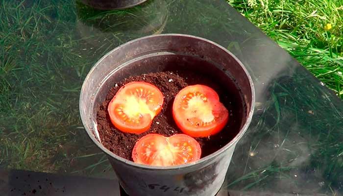 Cómo germinar tomate del supermercado. Vídeo