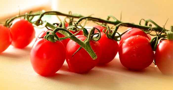 Cómo podar los Tomates