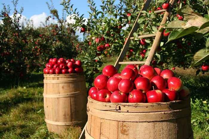Ventajas del consumo de fruta y verdura ecológica