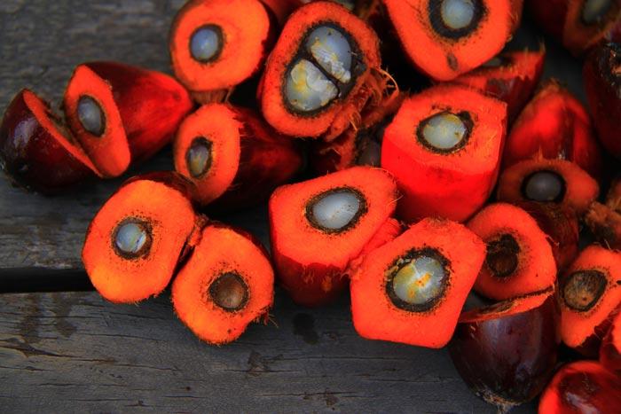 El aceite de palma como objeto de debate