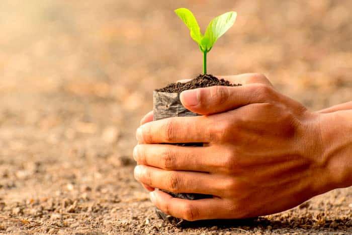 Cómo hacer Semilleros para tus Plantas con Periódicos