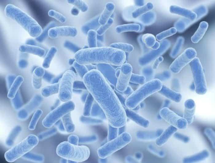 Probióticos - Beneficios del yogur griego