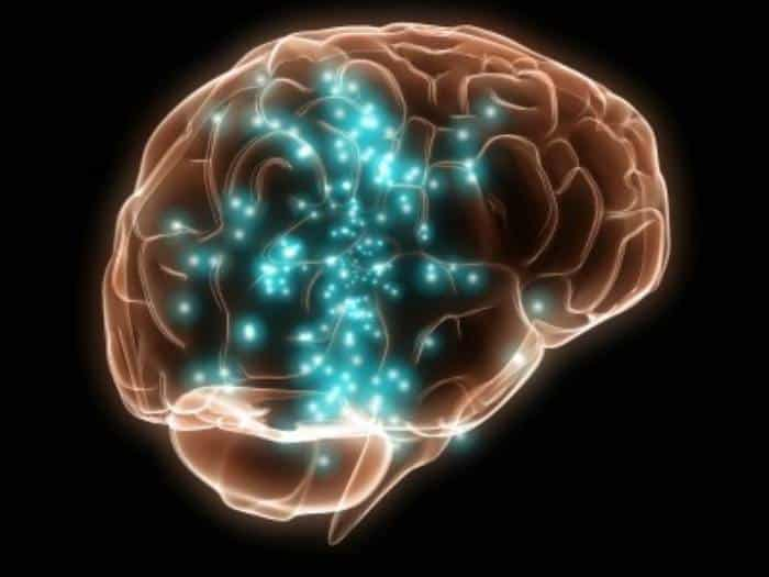 propiedades del hinojo - cerebro