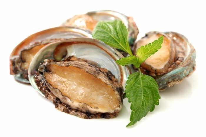 abalones - abalón en lecho de lechuga