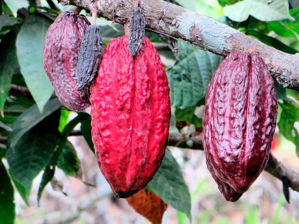Fruta de ecuador