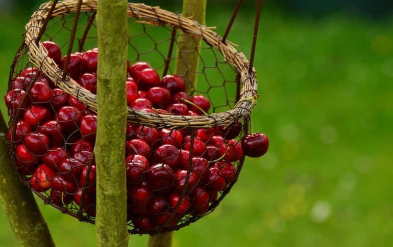 La cereza: Propiedades y recetas
