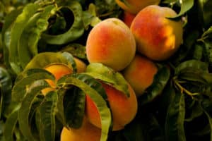 Los mejores alimentos: frutas y verduras de temporada para junio