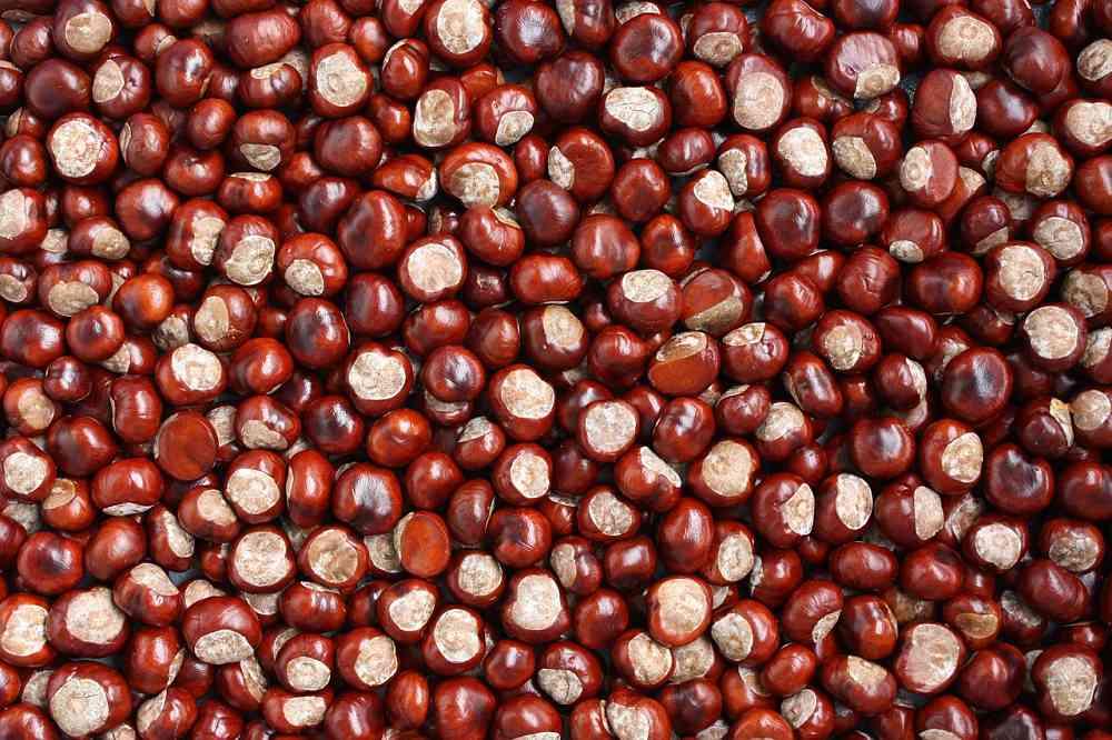 Potaje de castañas. Receta de Huelva