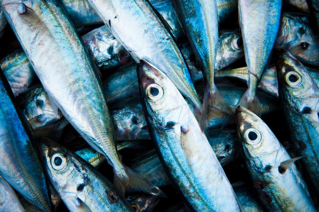 Consejos para comprar pescado fresco