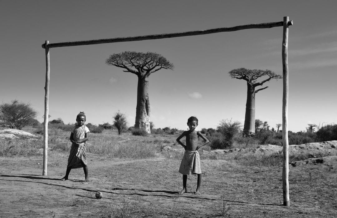 Descubre el Baobab: un alimento antioxidante que te sorprenderá