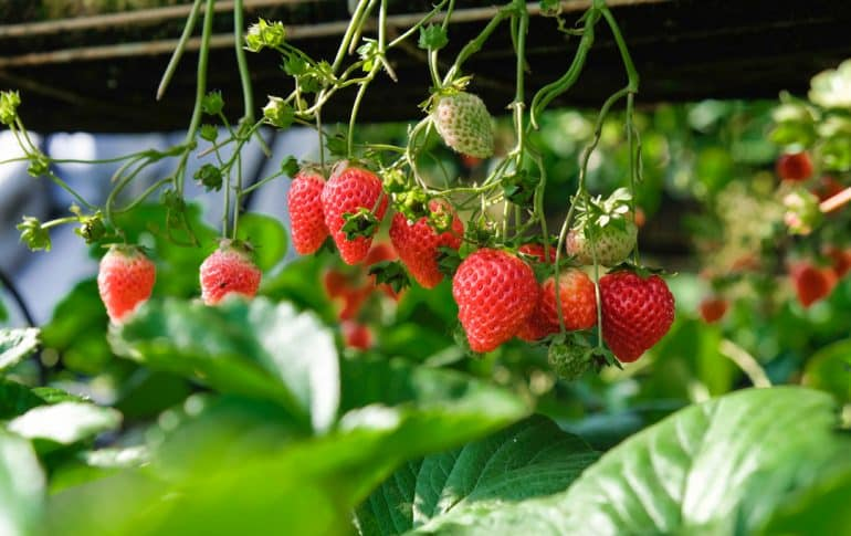Los alimentos de primavera que debes incluir en tu nevera