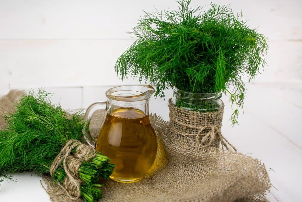 Los beneficios y las propiedades medicinales del Eneldo
