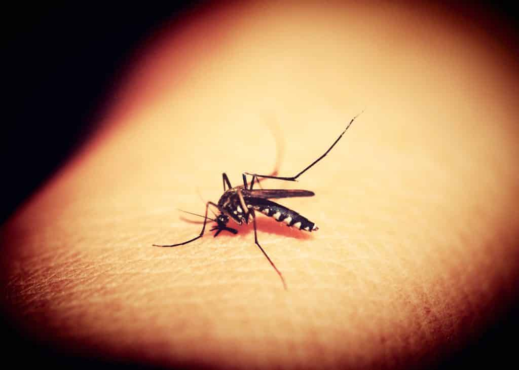 5 trucos caseros para ahuyentar a los mosquitos de verano