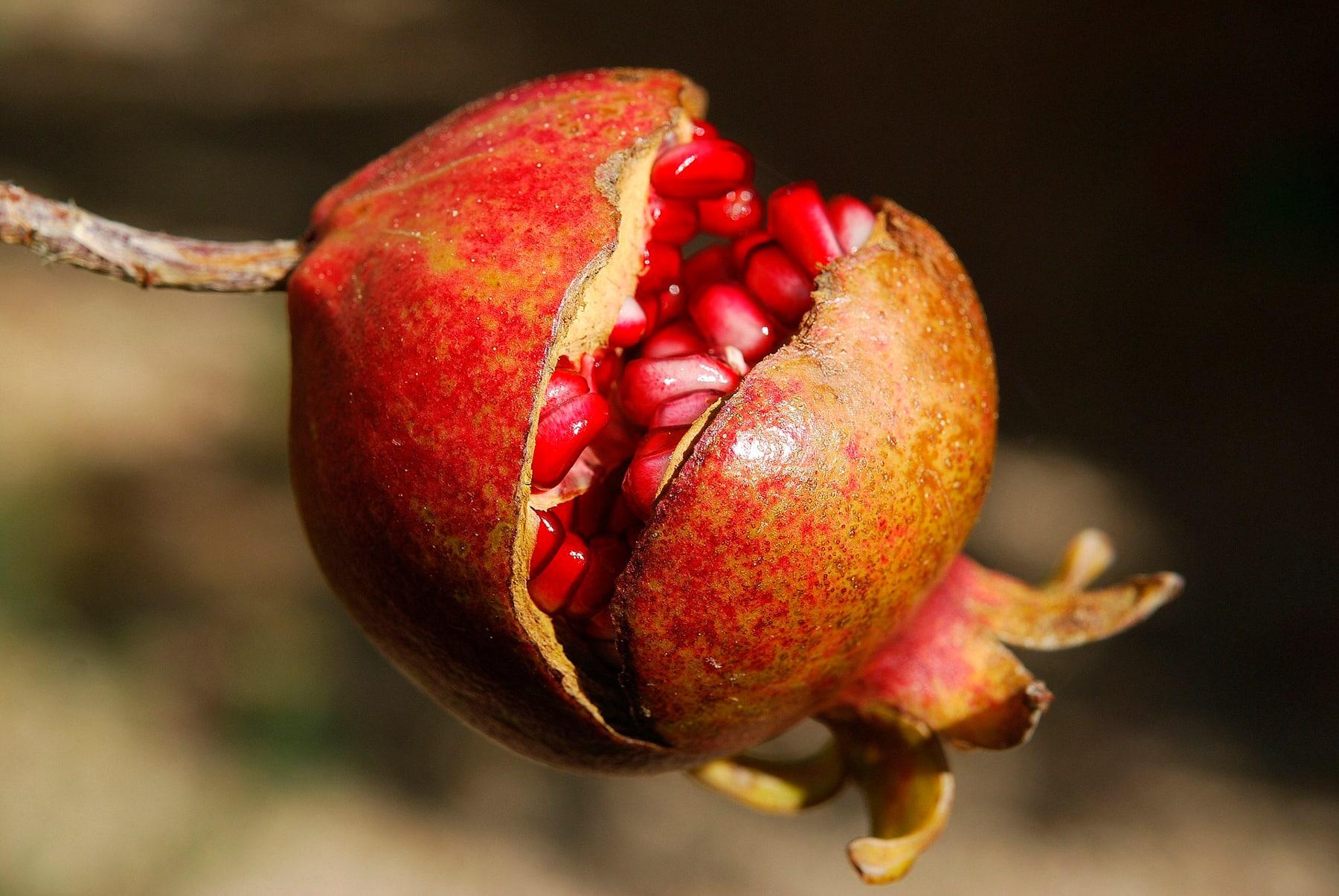 Descubre en qué consiste la dieta antiaging contra el envejecimiento
