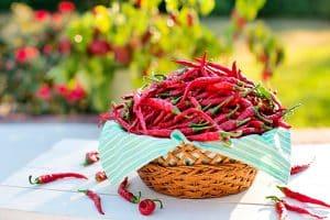 El picante en tu comida: Cinco razones para no consumirlo en exceso
