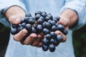 Las uvas: Cinco propiedades y razones para comerlas durante este otoño