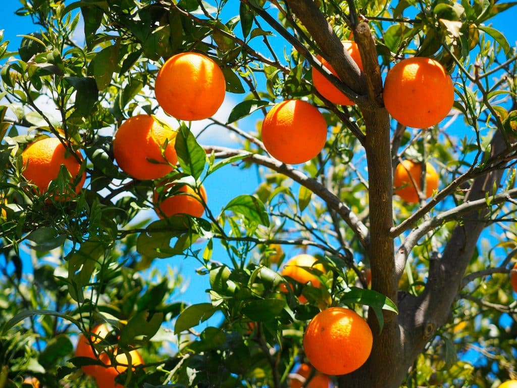La naranja: Una gran aliada contra la gripe y los resfriados de invierno