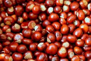 Las castañas: Descubre todas sus propiedades y beneficios nutricionales