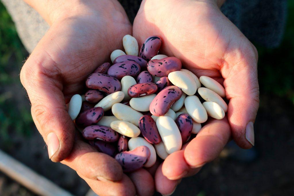 Los antinutrientes: Descubre cuáles son y cómo acabar con ellos