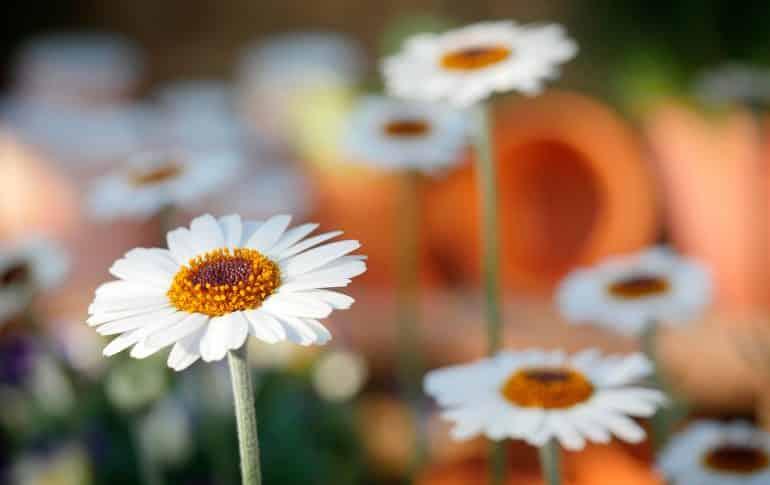 Seis recetas saludables y sencillas para la temporada de primavera
