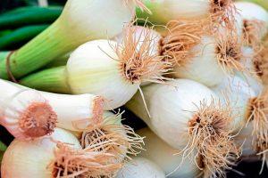 Cebolletas, uno de los tipos de cebollas