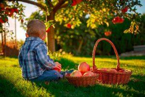 Beneficios de consumir frutas y verduras ecológicas