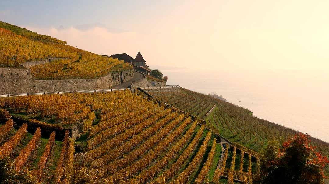 Viñedos en Lavaux Suiza