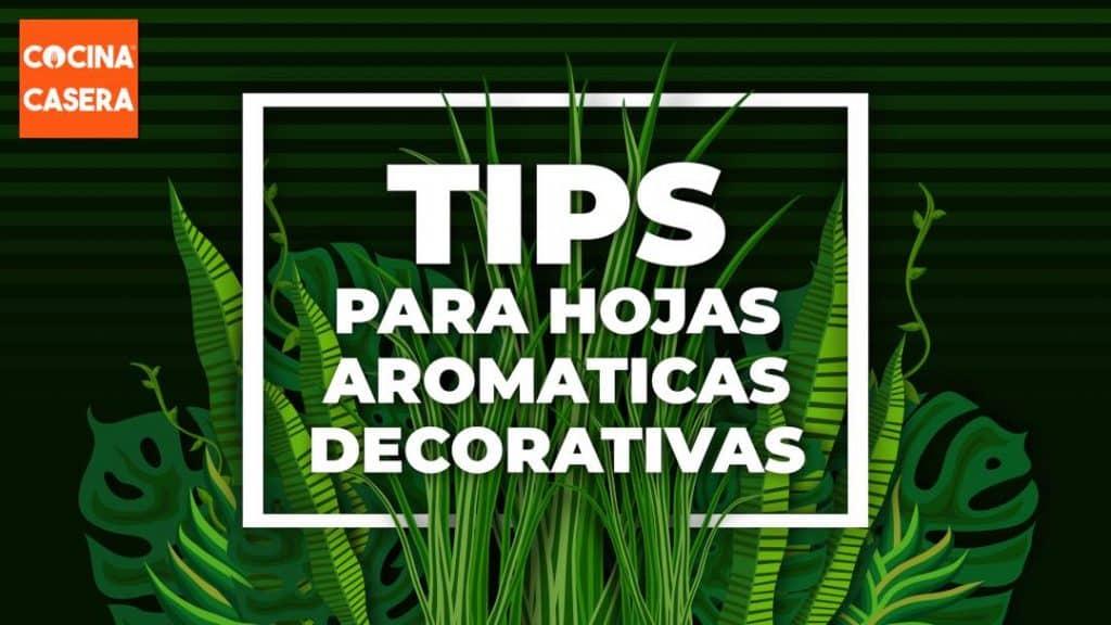 Tips para las hojas aromáticas decorativas