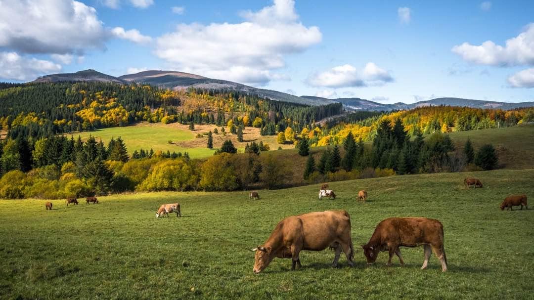 La dieta climática propone un menor consumo de carne