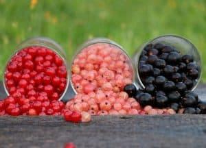 Tres variedades de grosellas